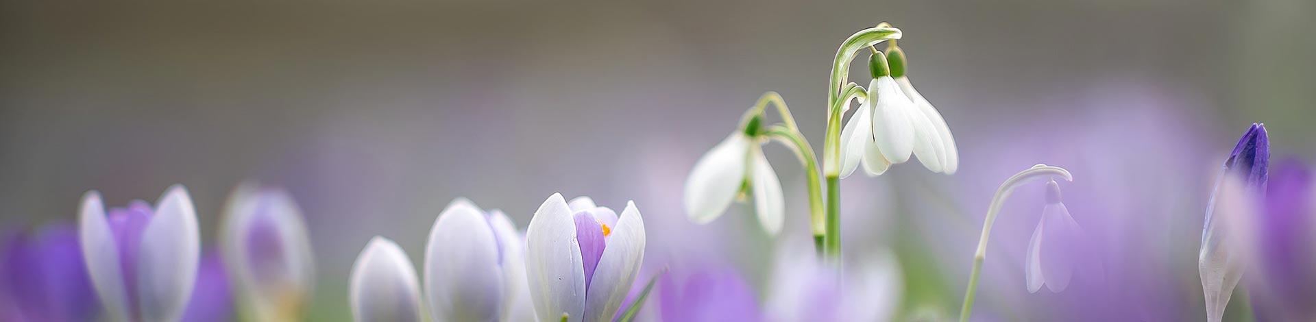 Slide Spring 4